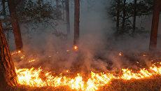 Лесоторфяной пожар