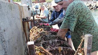 Работа сотрудников устричной фермы