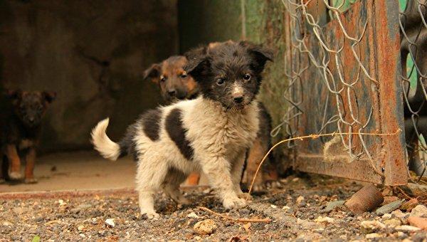 ВСевастополе начнут отлов бездомных животных