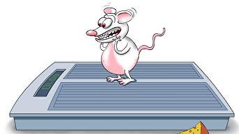 Почему мыши не толстеют
