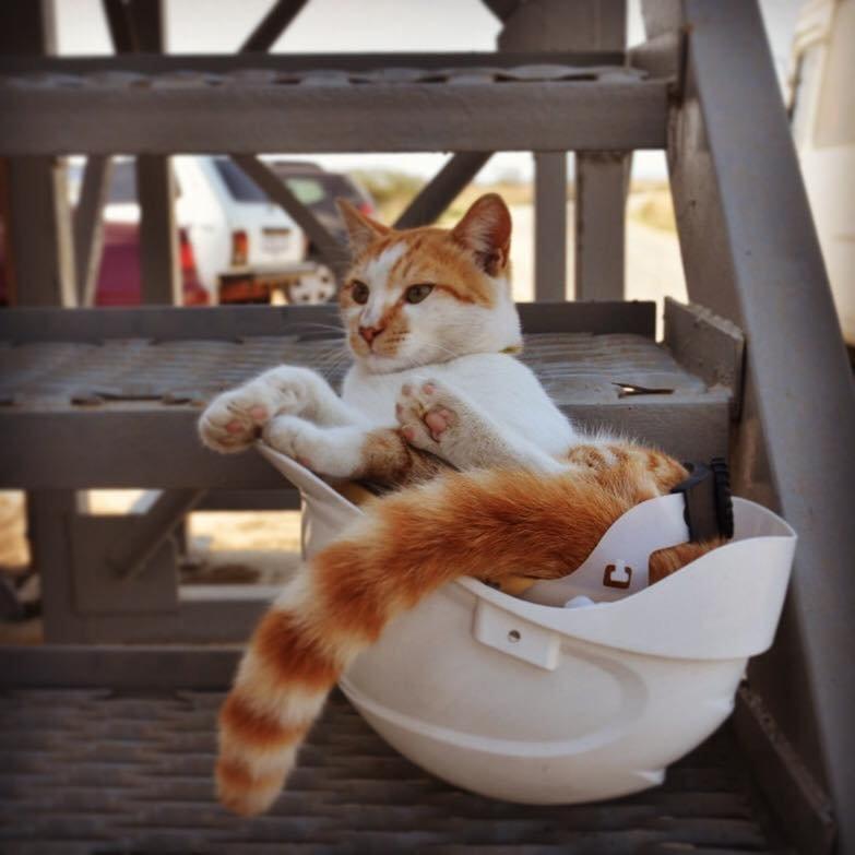 Кот мостик керчь фото