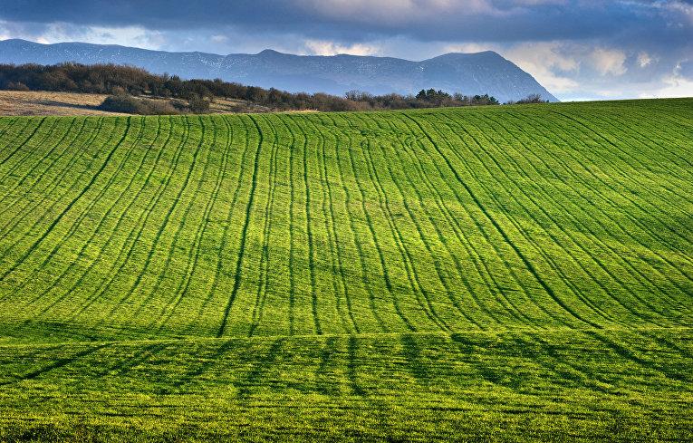 земельный пай сельхозназначения цена в крыму