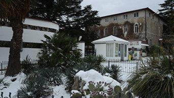 Никитский ботанический сад зимой