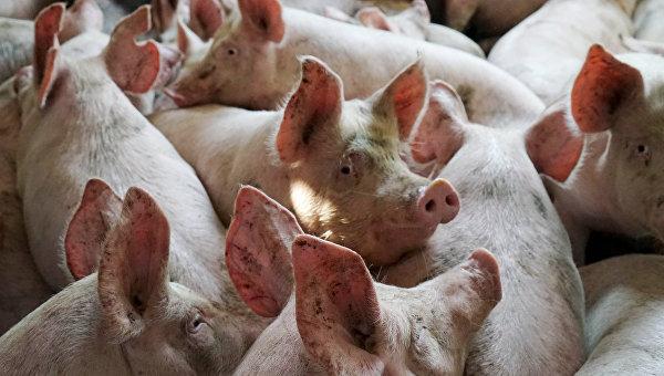 ООО Прибалийская мясная компания три