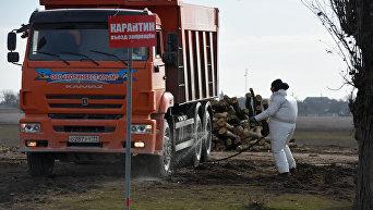 Очаг эпидемии АЧС, с. Новоселовка Раздольненского района
