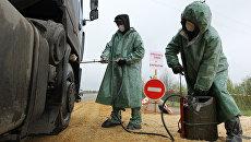 Вспышка африканской чумы свиней. Архивное фото