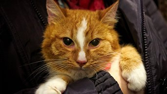 День раздачи бездомных рыжих котов в Котокафе Республика Кошек в Санкт-Петербурге