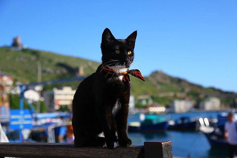 Крымский кот-патриот в Балаклаве