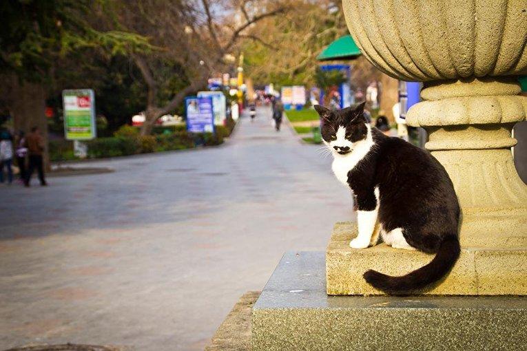 Кот на набережной Ялты