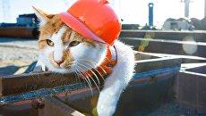 Кот Мостик - обитатель стройки Керченского моста