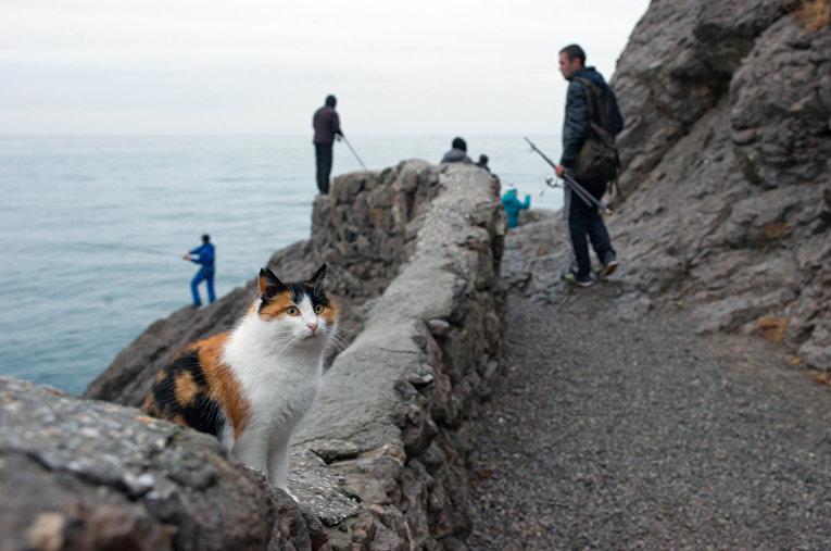 Кот на Голицынской тропе в Новом Свете