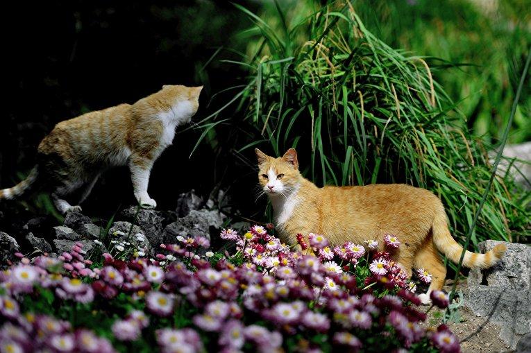 Коты в Никитском ботаническом саду