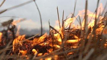 Травяной пожар