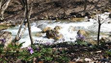 Горная река Коккозка в селе Соколиное Бахчисарайского района