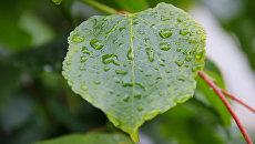 Дождь в Крыму