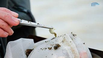 Специалисты Азовского научно-исследовательского института рыбного хозяйства ведут мониторинг влияния строительства Крымского моста на водные биоресурсы и ихтиофауну
