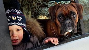 Ребенок и собака в машине