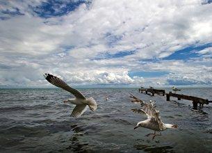 Чайки на Черном море в Евпатории