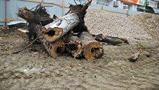 Снос деревьев в рамках реконструкции центральных улиц Симферополя