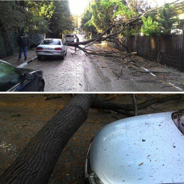 упало дерево в Ялте