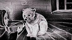 Кадр с видеоролика Ксении Симоновой для Всемирного фонда дикой природы России в защиту белых медведей