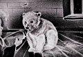 Кадр с видеоролика Ксении Симоновой для WWF России в защиту белых медведей
