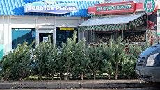 Продажа елок. Архивное фото
