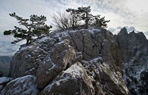 Сосны на горе Ай-Петри