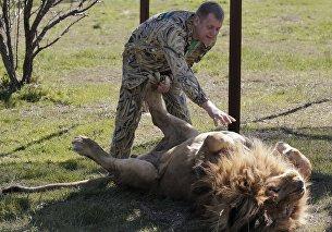 Сафари-парк львов Тайган в Крыму