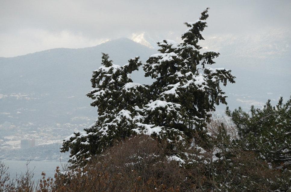 Зима в Никитском ботаническом саду
