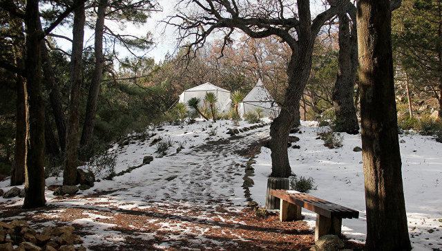 Никитский ботанический сад, парк Монтедор, агавы под защитным колпаком