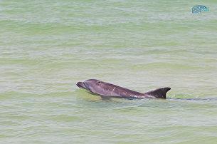 Строительство моста через Керченский пролив увеличило численность дельфинов