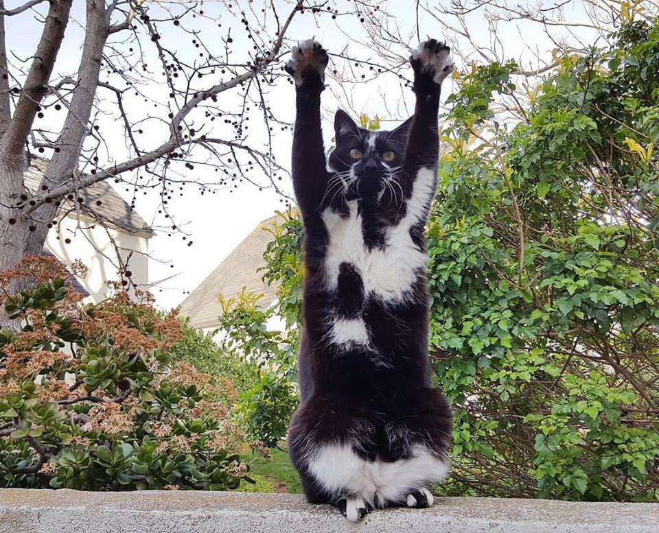 Кошка GoalKitty