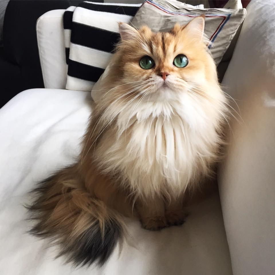 Кошка Смузи, самая фотогеничная в мире