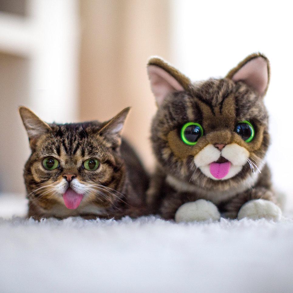 Кошка Лил Баб с плюшевой игрушкой