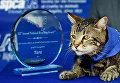 Кошка Тара, которая спасла от нападения собаки ребенка