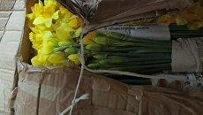 Нарциссы, которые пытались ввести в Крым из Украины