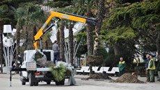 Высадка пальмовой аллеи на набережной Ялты на месте комплекса Еда