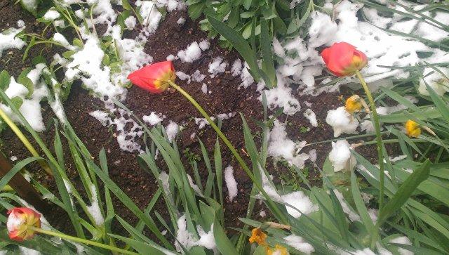 Граждан Крыма шокировал выпавший вконце апреля снег