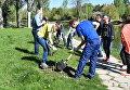 Высадка деревьев в Гагаринском парке Симферополя в рамках Всекрымского субботника