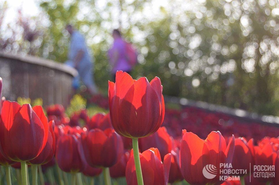 Цветы в Севастополе