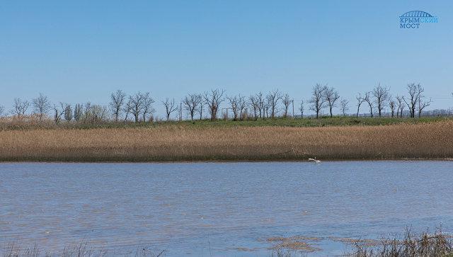 Молодь русского осетра выпустят в естественную среду по экопрограмме моста через Керченский пролив