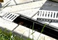 Краснокнижная змея заползла в частное домовладение в Симферопольском районе