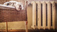 Кот в кресле у батареи. Архивное фото