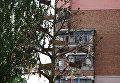 Генеалогическое дерево Керчи