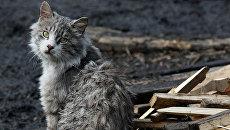 Кот во дворе приюта для бездомных животных. Архивное фото