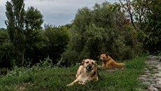 Бездомные собаки. Архивное фото