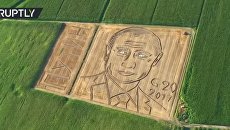 Скриншот с видео Land art: Giant Putin portrait emerges on cornfield ahead of G20 talks