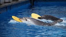 Дельфины в севастопольском дельфинарии