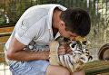Тигренок в сафари-парке Тайган в Крыму